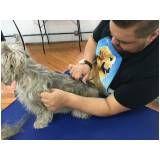 Hand-Stripping em Fox Terrier preço em Guarulhos