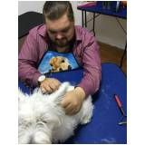 Hand-Stripping em Scottish Terrier preço em Barueri