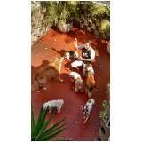 hospedagem canina no Itaim Paulista
