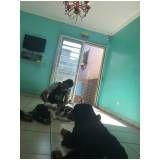 hospedagem de cachorro preço no Sacomã