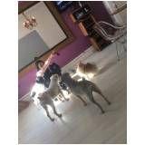 hospedagem de cachorro em Santana de Parnaíba