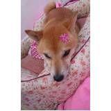 hospedagem em creche para cachorros na Vila Gustavo