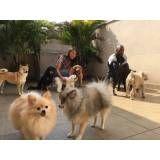 hospedagem em creche para cães no Brás