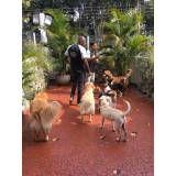 hospedagem para cães em Santana