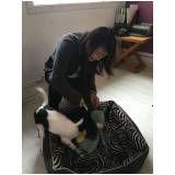 hospedagem para pets em Santa Cecília