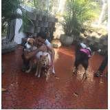 hotel canino online em São Bernardo do Campo