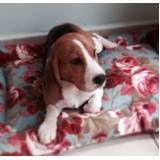hotel especializado em cachorros no Socorro