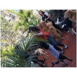 hotel especializado para canino no Morumbi