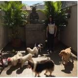 hotel para cachorro em são paulo no Arujá