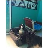 hotel para cachorro em sp na Saúde