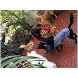 Hotelzinho para cachorro preço em Santo Amaro
