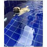 natação canina preço em Taboão da Serra