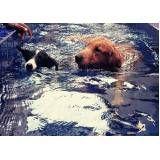 natação canina em Guararema