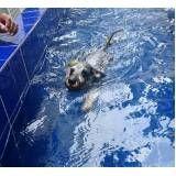 natação de cachorro no Rio Pequeno