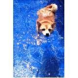natação e spa para cachorro em Itapevi