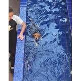 centro de natação para cachorro