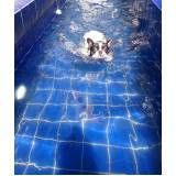natação para cachorro em são paulo preço no Parque do Carmo