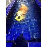 natação para cachorro em são paulo no Morumbi