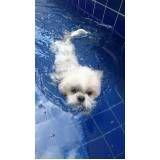 natação para cachorro em sp preço em Diadema