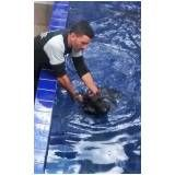 natação para cachorro em sp na Vila Curuçá