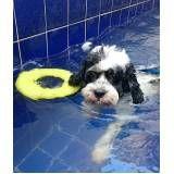 espaço de natação para cachorro