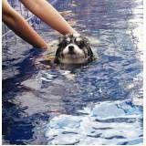 natação canina