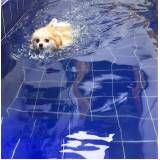 natação de cachorro