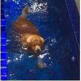 sessão de natação para cachorros