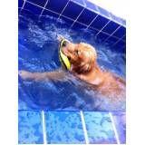 natação para cachorro no Sacomã