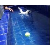 natação para cachorros no Aeroporto