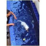 natação para cães preço em Embu das Artes