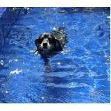 natação para cães no Jardim Bonfiglioli