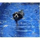 natação para cães na Vila Prudente