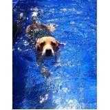 natação para cão em Sumaré