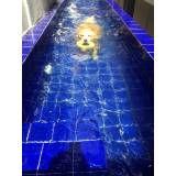 onde encontrar natação para cachorro em são paulo em Suzano