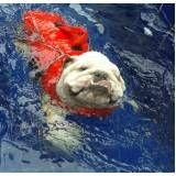 onde encontrar sessão de natação para cachorros no Arujá