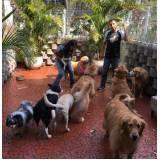 onde encontrar Spa para Cachorros em Jundiaí