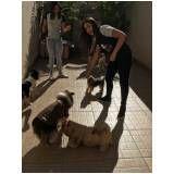 quanto custa adestramento de cachorros no Parque São Lucas