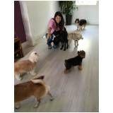 quanto custa adestramento para cachorros em Osasco