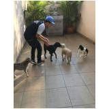quanto custa adestratemnto para cães em Embu das Artes