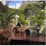 quanto custa centro clínico de fisioterapia canina em Glicério