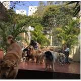 quanto custa centro clínico de fisioterapia canina em Santa Cecília