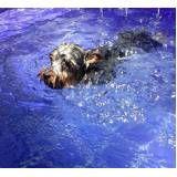 quanto custa centro de natação para cachorro no Rio Pequeno