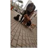 quanto custa creche de cães no Jardim São Paulo