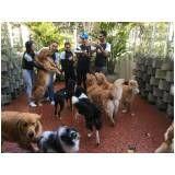 quanto custa creche hotel para cães em Franco da Rocha