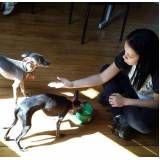 quanto custa creche para cachorro em são paulo na Vila Gustavo