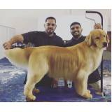 quanto custa curso de tosa golden retriever Diadema