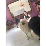 quanto custa espaço creche para cães no Tucuruvi
