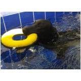 quanto custa espaço de natação para cachorro na Santa Efigênia