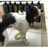 quanto custa estética para cães em Santo André